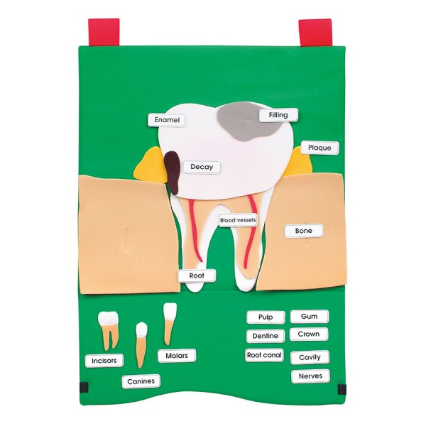 Tooth Health and Hygiene Wall Hanging